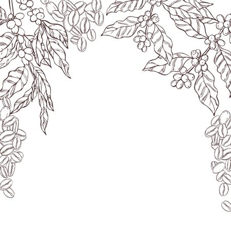 Vector background with hand drawn  coffee  plants and beans. Sketch  illustration. 일러스트