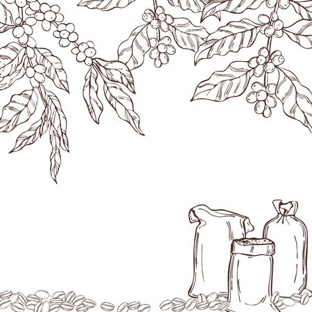 Vector background with hand drawn  coffee  plants and beans. Sketch  illustration. Çizim