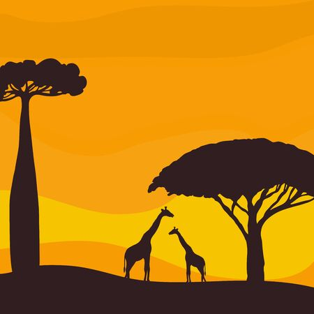 Sunset in the savannah. Silhouette of giraffes and trees. Vector illustration.