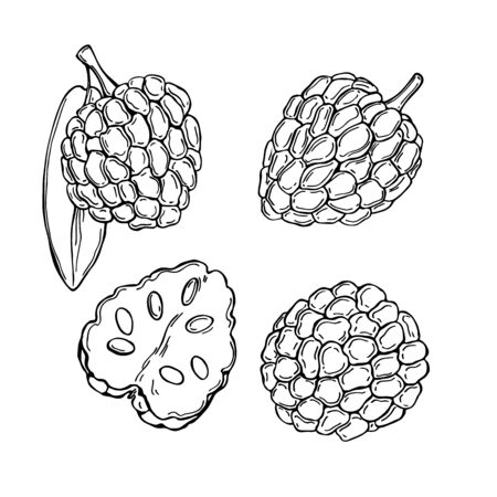 Hand drawn African fruits. Custard apple (Annona senegalensis, wild soursop, sunkungo, dorgot) Vector sketch illustration.
