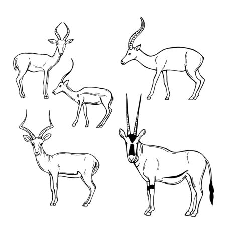 Hand drawn African Antelopes. Vector sketch illustration.