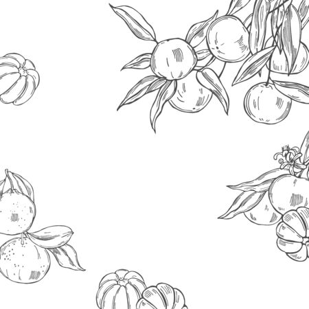Hand drawn tangerines on white background. Vector  background