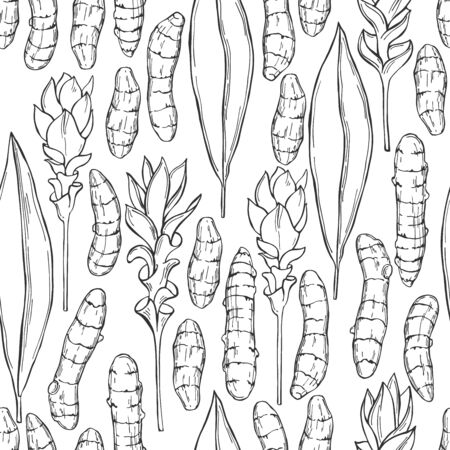 Hand drawn spiceTurmeric. Vector seamless pattern. Sketch illustration