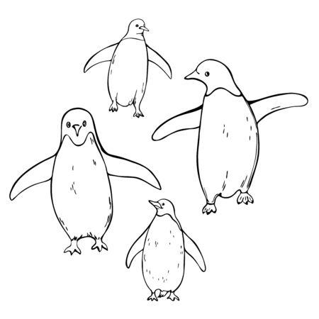 Hand drawn penguins on white background.  Vector sketch  illustration.