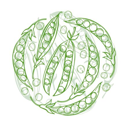 Hand drawn peas in a circle. Vector sketch; illustration.