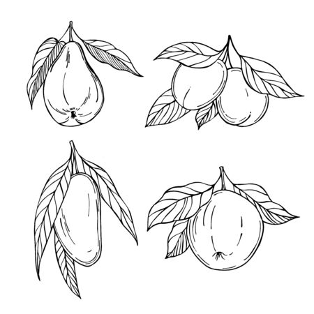Hand drawn fruits. Apple, mango, pear, apricots. Vector sketch  illustration.