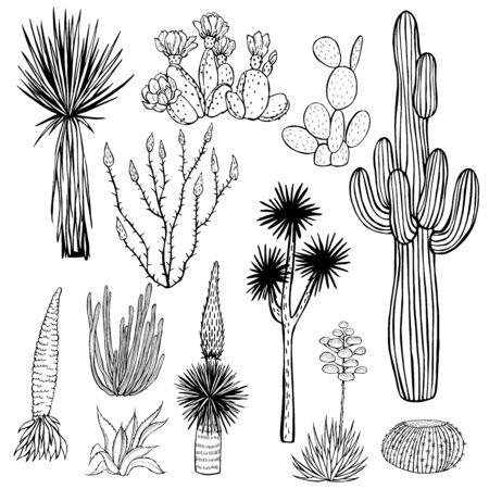 Desert plants, cacti. Vector sketch  illustration. 向量圖像