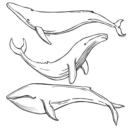 Hand drawn whales. Vector sketch  illustration. Vettoriali