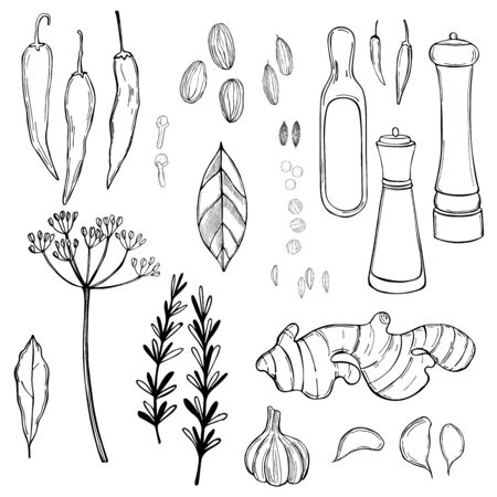 Hand drawn spice set. Vector sketch illustration.