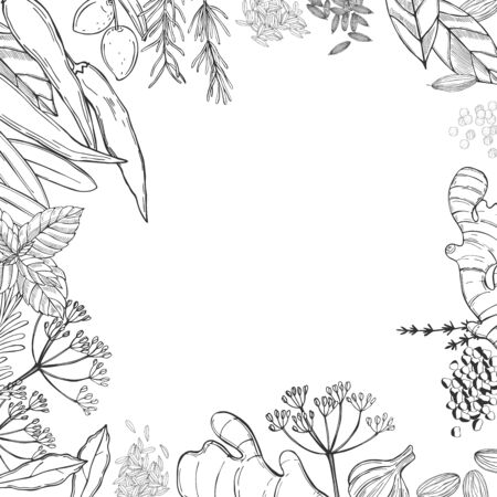 Vector background with hand drawn spices and herbs. Sketch illustration.