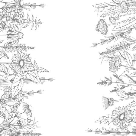 Hand drawn medicinal herbs.Vector sketch  illustration.