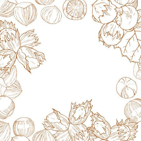 Vector background with hand drawn nuts. Hazelnut nut.  Sketch  illustration.