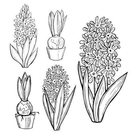Hand drawn hyacinths. Spring flowers. Vector sketch illustration.