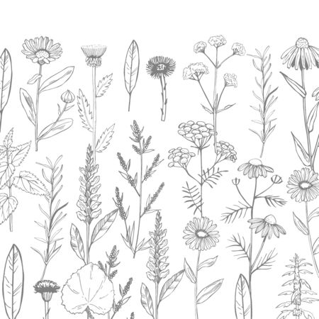 Vector background with hand drawn medicinal herbs. Sketch  illustration. Stock Illustratie