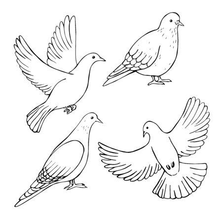 Hand drawn doves . Vector sketch  illustration. Ilustrace