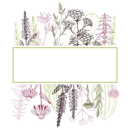 Hand drawn medicinal herbs. Vector frame