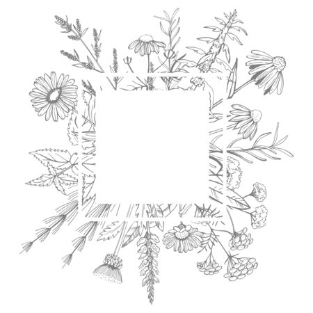 Hand drawn medicinal herbs.Vector frame Stock Illustratie