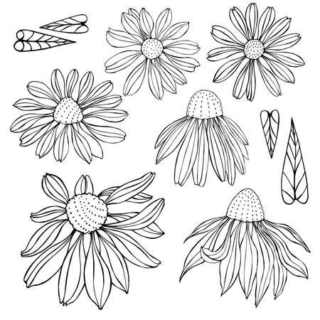 Hand drawn flowers. Vector sketch illustration.