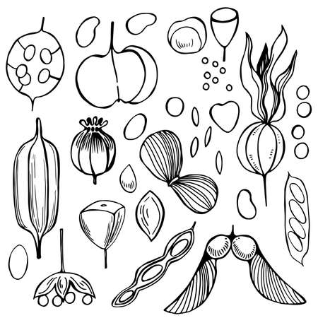 Hand drawn seedpods. Vector sketch illustration.
