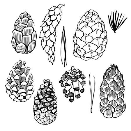 Set of hand drawn pine cones. Vector sketch illustration.