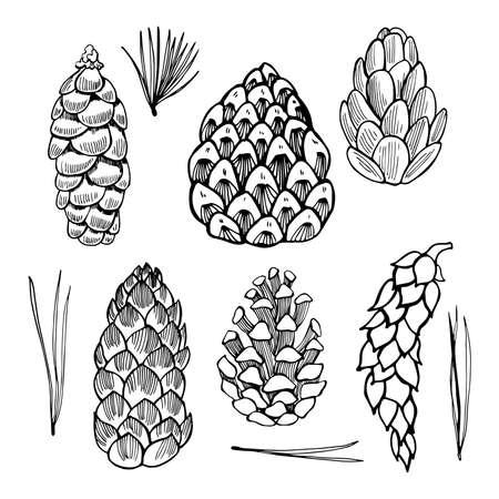 Set of hand drawn pine cones. Vector sketch illustration. Vektorové ilustrace