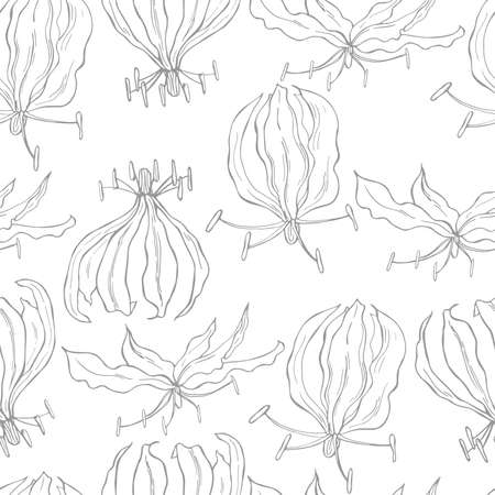 Vector seamless pattern with hand drawn gloriosa flower. Ilustração