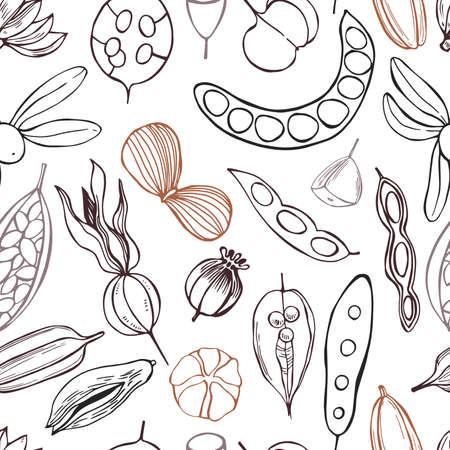 Vector seamless pattern with hand drawn seedpods.
