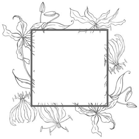 Vector frame with hand drawn gloriosa flower.