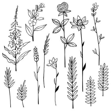 Hand drawn wild herbs and flowers. Vector sketch illustration Ilustración de vector