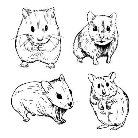 Hand drawn hamster. Vector sketch illustration.