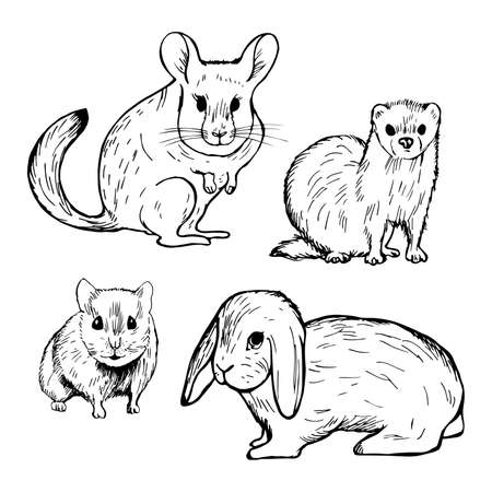 Hand drawn pet rodents. Rabbit, hamster, chinchilla and ferret. Vector sketch illustration. Illustration