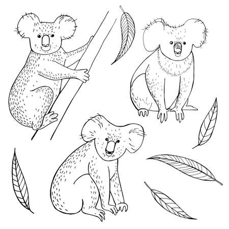 Hand drawn koala and eucalyptus leaves on white background. Vector sketch illustration. Vettoriali