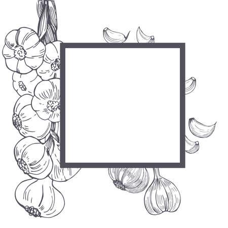 Vector frame with hand drawn garlic. Sketch illustration