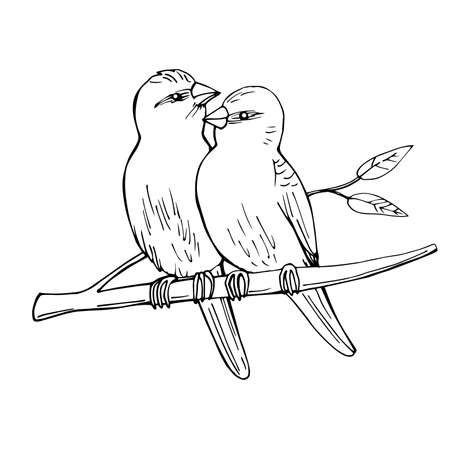 Two birds sitting on a branch. Vector sketch illustration. 向量圖像