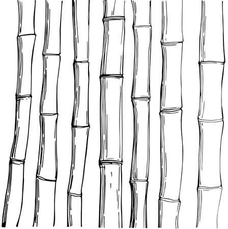 Bamboo. Vector sketch illustration