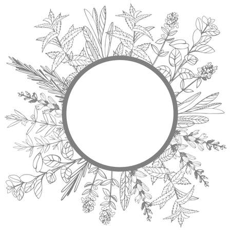 Vector frame with hand drawn herbs. Sketch illustration. 向量圖像