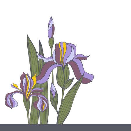 Hand-drawn iris flowers. Vector sketch illustration 向量圖像