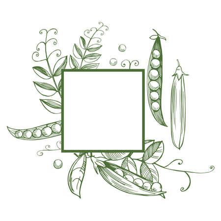 Vector frame with hand drawn peas.