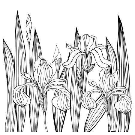 Hand-drawn iris flowers.Vector sketch illustration