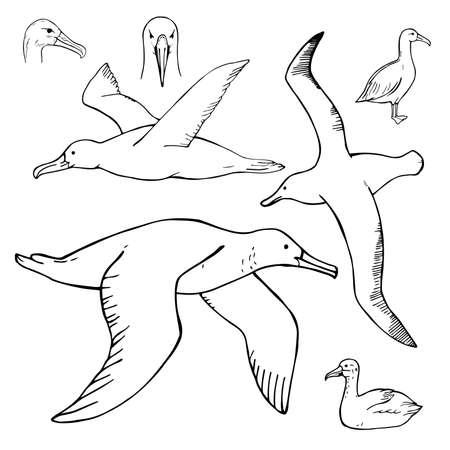 Hand drawn petrel. Vector sketch illustration