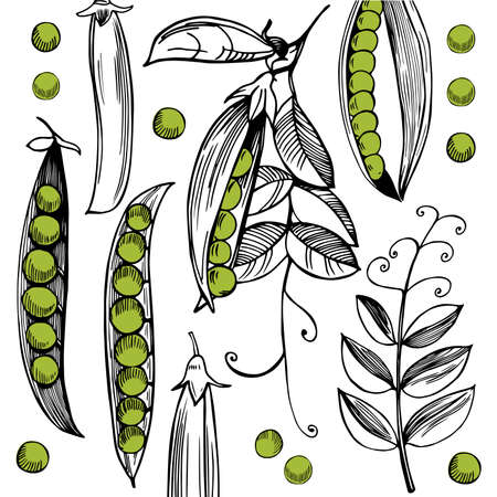 Vector background with hand drawn peas.