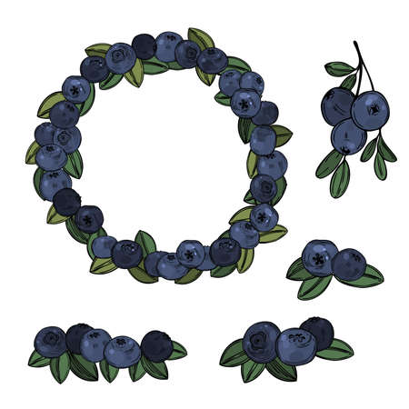 Hand drawn forest berry. Bilberry, huckleberry. Vector sketch illustration