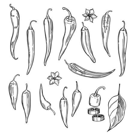 Hand drawn chili peppers on white background. Vector sketch illustration