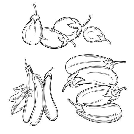 Hand drawn eggplant. Vector sketch illustration. Illustration