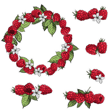 Hand drawn berry. Raspberry on white background. Vector sketch illustration Vector Illustratie
