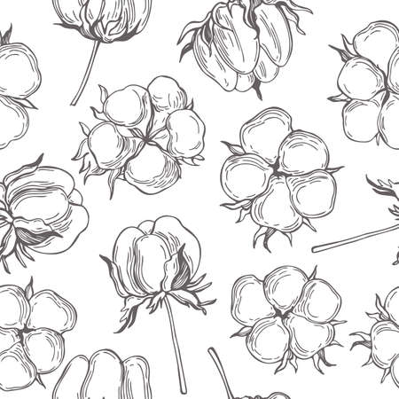Vector seamless pattern with hand drawn cotton plant. Sketch illustration