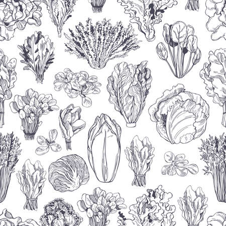 Hand drawn different kinds of lettuce on white background. Vector seamless pattern