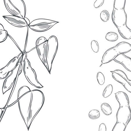 Vector background with hand drawn soybean plant. Sketch illustration.