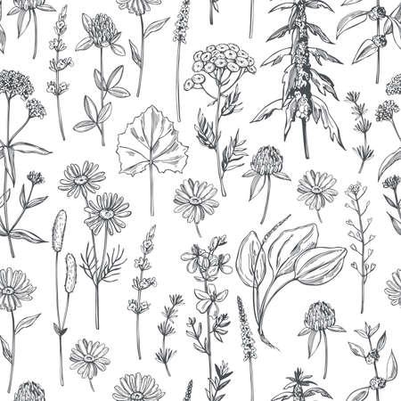 Hand drawn medicinal herbs.Vector seamless pattern. Vector Illustration