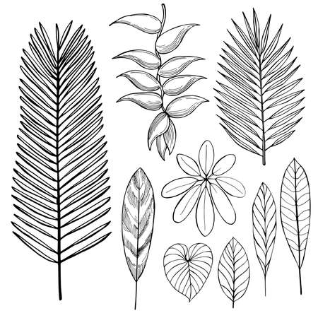Hand drawn tropical plants. Leaves and flowers sketch illustration. Vettoriali